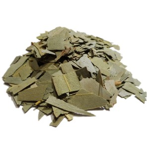 eucalyptus-feuille-coupee-gros-bio-macropanesthia-rhinoceros-blatte-substrat
